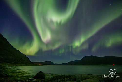 Nordlys over fjord